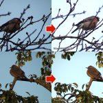 野鳥を撮影するなら必ずできるようにしておかないといけない露出補正