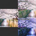 桜の花満開の画像を使って花びらが舞い散る様子や雪が舞い散る様子を合成する方法(1/2)