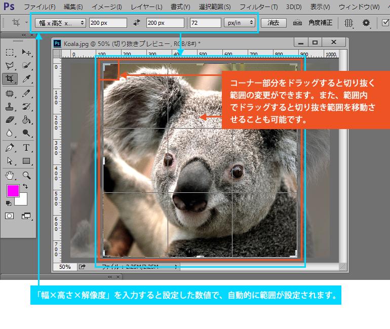 Photoshop CC 切り抜きツール