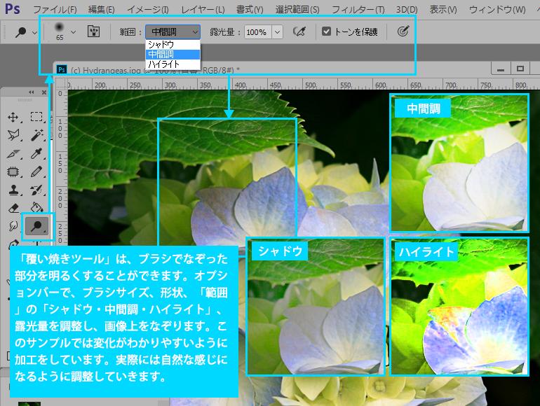 Photoshop CC 焼き込みツール